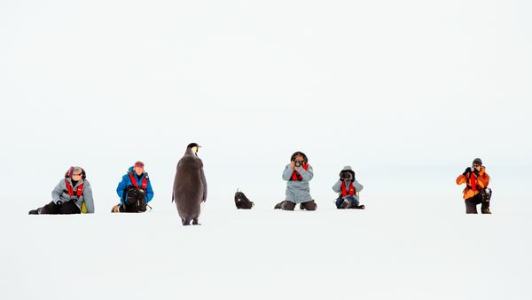 4-antarctica-ship-stranded-pictures-peacock_74934_600x450